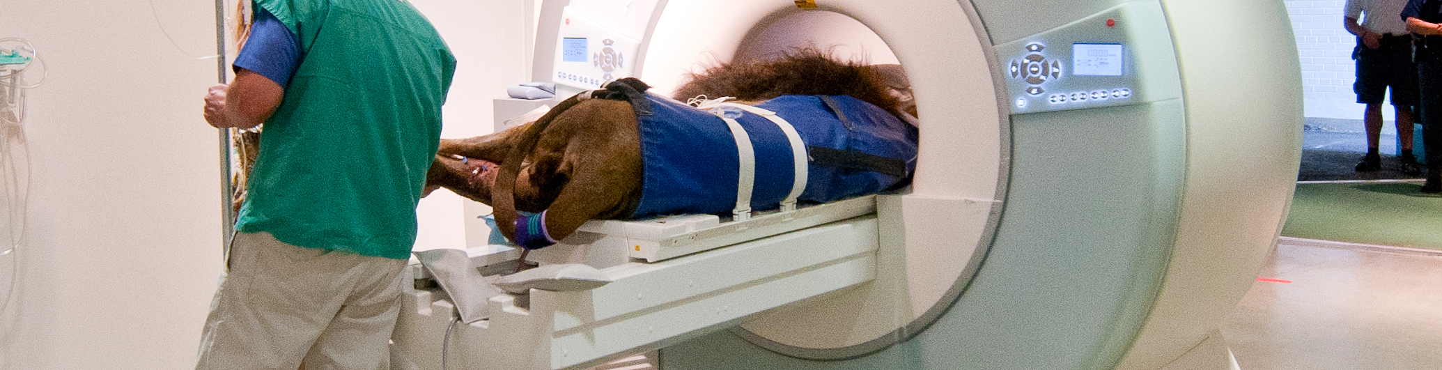 Lion CT Scan